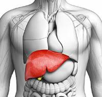 Infectious Disease of the Liver in the Geriatric Patients