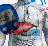 Liver and Diabetes: A Vicious Cycle