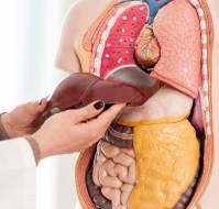 Risk of Liver Fibrosis Progression From Fatty Liver in Obesity